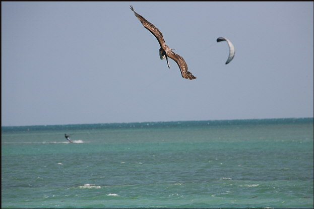 b014_osprey-and-kite-surfer