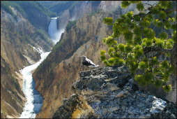 t089_Yellowstone-National-Park